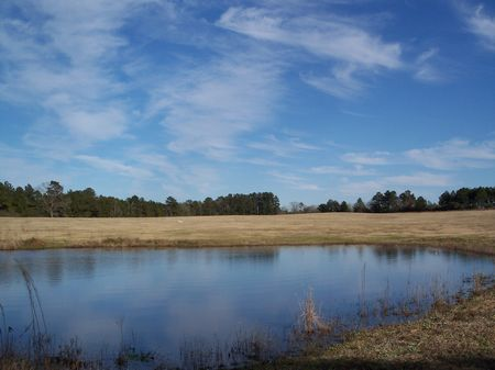 12 Acres Rolling Pasture W/ Pond : McComb : Amite County : Mississippi