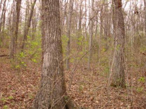 8.64+/- Acres On Round Bottom : Mountain View : Stone County : Arkansas