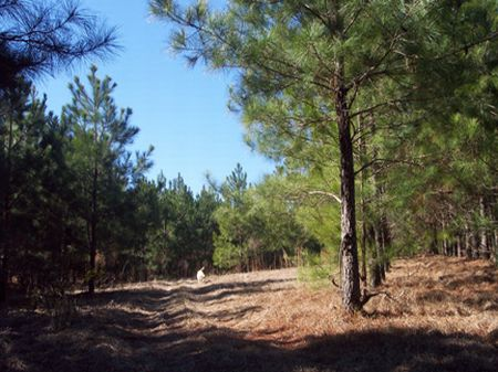 12.17 Acre Mini Farm : McComb : Pike County : Mississippi