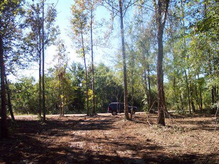 15 Ac Wooded W/ Homesite, Creek : Osyka : Pike County : Mississippi