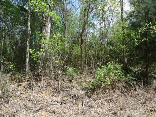 20 +/- Acres In Jack, Al : Jack : Coffee County : Alabama