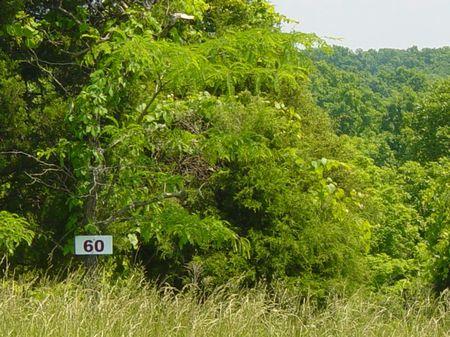 Lot 60 Doe Run Wildwood Acres Sub : Owenton : Owen County : Kentucky