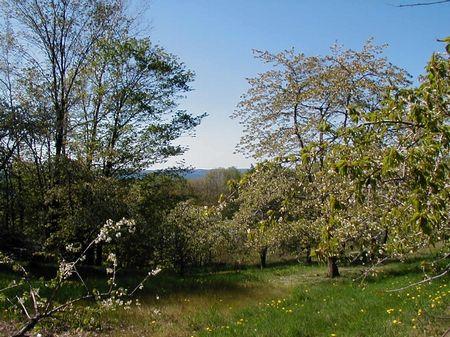 Vineyard With Gt Bay Views : Traverse City : Grand Traverse County : Michigan