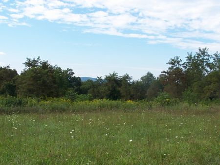 9 Buildable Tracts In Carroll Co. : Woodlawn : Carroll County : Virginia
