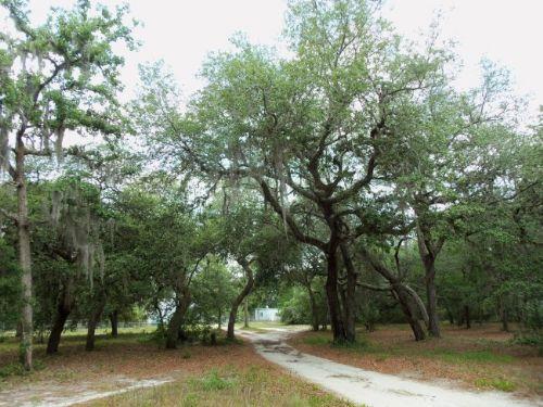 (a-366) 9.77 Acres : Melrose : Putnam County : Florida
