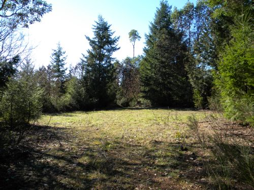 Secluded Forested Acreage : Shelton : Mason County : Washington