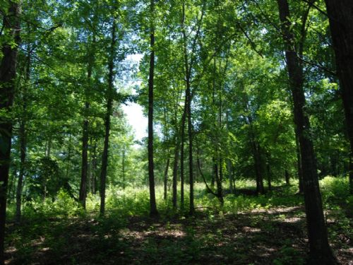 .55 Acre Lot In Great Area : Spartanburg : Spartanburg County : South Carolina