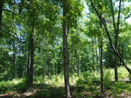 1 Acre Lot In Great Area : Spartanburg : Spartanburg County : South Carolina