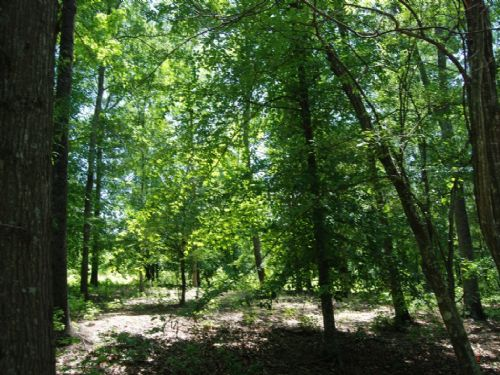 3.2 Acre Lot Or 4 Separate Lots : Spartanburg : Spartanburg County : South Carolina
