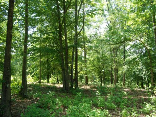 7.08 Acre Lot In Great Location : Spartanburg : Spartanburg County : South Carolina