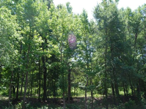 10.66 Acres In South Spartanburg : Spartanburg : Spartanburg County : South Carolina