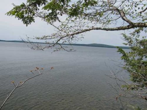 Lot 15 Bear Trap, West Grand Lake : Grand Lake Stream : Washington County : Maine