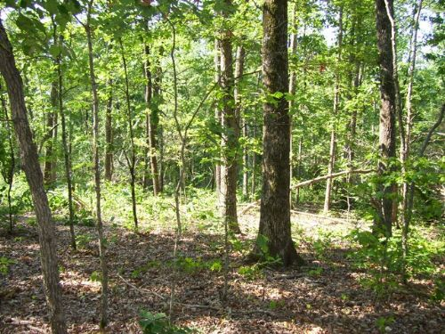 8 Acres Near I-40 : Sugar Tree : Decatur County : Tennessee