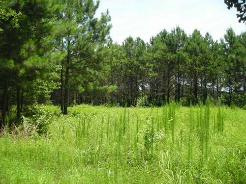 Agricultural Homesite : New Zion : Clarendon County : South Carolina
