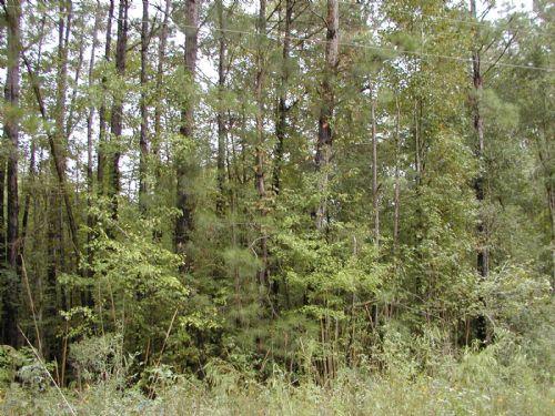 +/- 8.5acres - Merit Road : Mendenhall : Simpson County : Mississippi