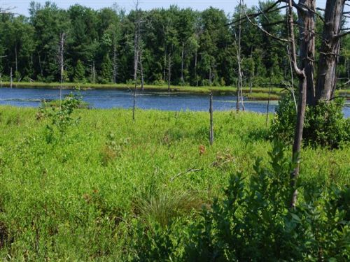 Scenic Pond And Wooded Acres : Albion : Oswego County : New York