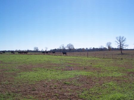 6 Acres Country Homesite : Magnolia : Pike County : Mississippi