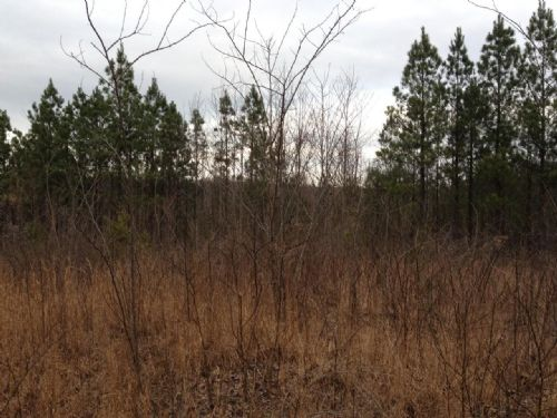 Owner Financing 5+ Acres : South Pittsburg : Marion County : Tennessee