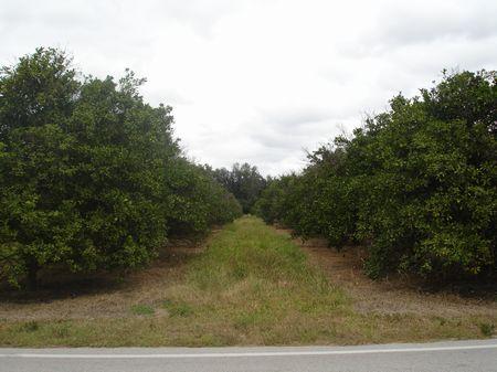 Gandy Rd. : Bartow : Polk County : Florida