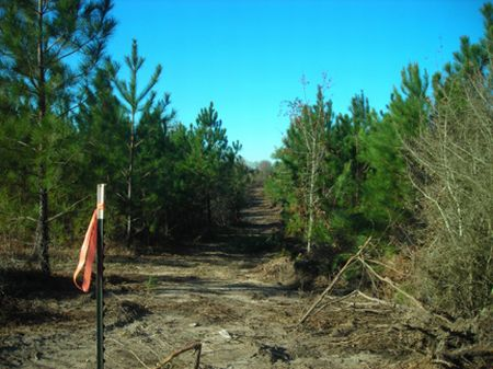 5.29 Acre Wooded Homesite : Liberty : Amite County : Mississippi