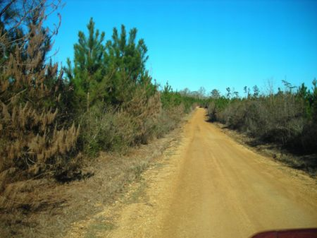 5.28 Acre Wooded Homesite : Liberty : Amite County : Mississippi