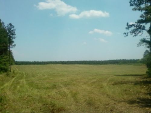Prefect For Horses, Mini-farm : Camden : Kershaw County : South Carolina