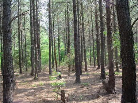 Planted Pine Investment : Sandersville : Washington County : Georgia
