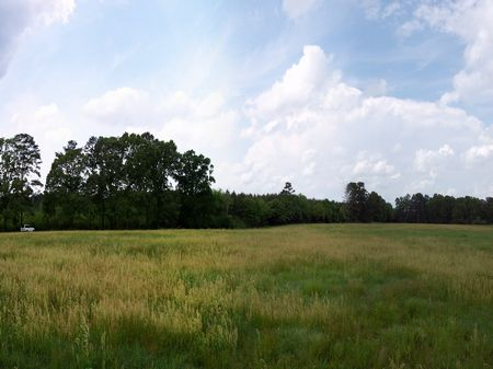 16 Ac. Rolling Pastureland : Liberty : Amite County : Mississippi