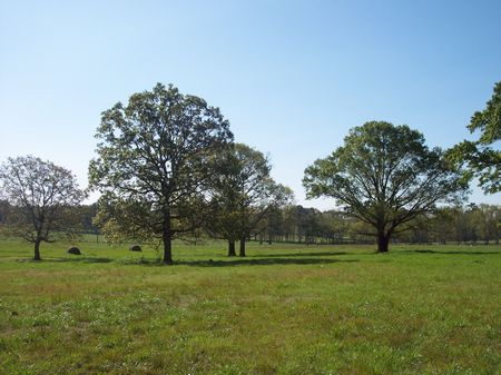 12 Ac. Rolling Pastureland : Liberty : Amite County : Mississippi