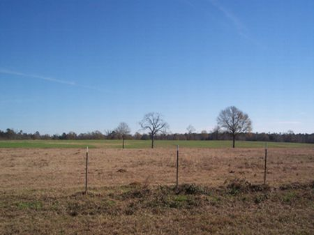 11 Acres Pasture W/ Scattered Oaks : Magnolia : Pike County : Mississippi