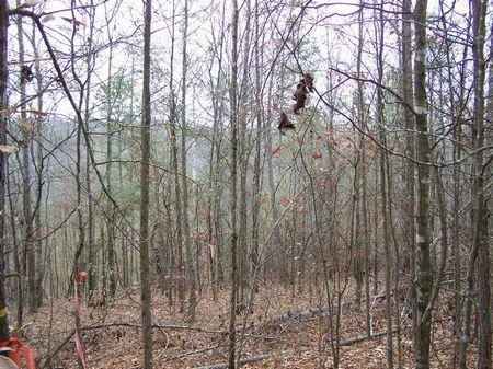 11+/- Acre Wooded Homesite : Ashland : Clay County : Alabama