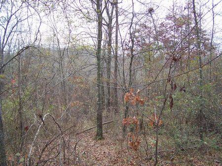 20+/- Acres Wooded Homesite : Ashland : Clay County : Alabama