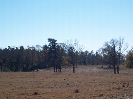 12 Acres Rolling Pasture : Osyka : Pike County : Mississippi
