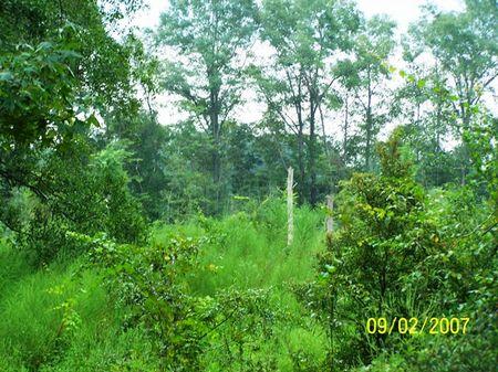 Rural Home Site : Dothan : Geneva County : Alabama
