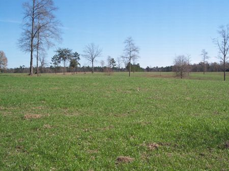 20 Acres Rolling Pastureland : Osyka : Pike County : Mississippi