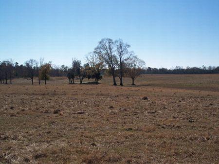 11 Ac. Home Site W/ Scattered Oak : Oyska : Pike County : Mississippi