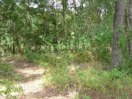 17.5ac Leslie Tract : Leslie : Sumter County : Georgia