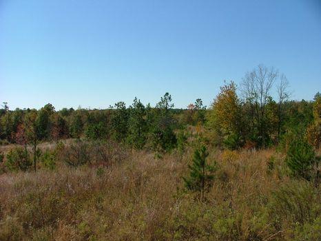 20 +/- Acres : Kite : Johnson County : Georgia