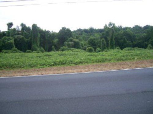 9.1 +/- Acres : Troy : Pike County : Alabama