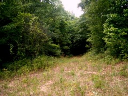 12.33 +/- Acres : Troy : Pike County : Alabama