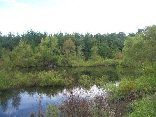 7.79 Ac Great For A New Home : Goshen : Pike County : Alabama