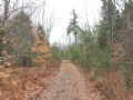 5 Acres Borders State Land Hunting
