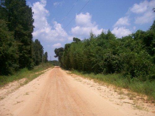 4+/- Ac Of Hardwood And Pine : Spring Hill : Pike County : Alabama