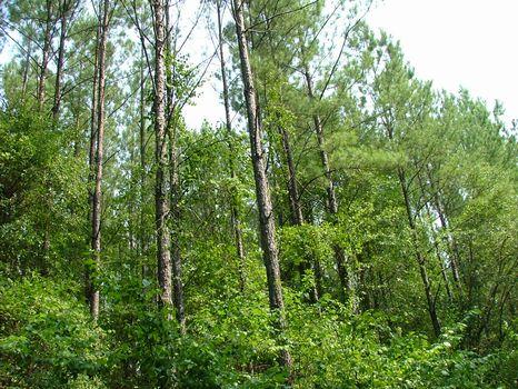 9.52 Acre Lot : Vidalia : Toombs County : Georgia