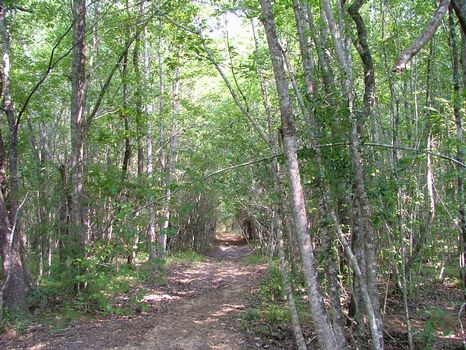 15.73 Acre Lot : Vidalia : Toombs County : Georgia