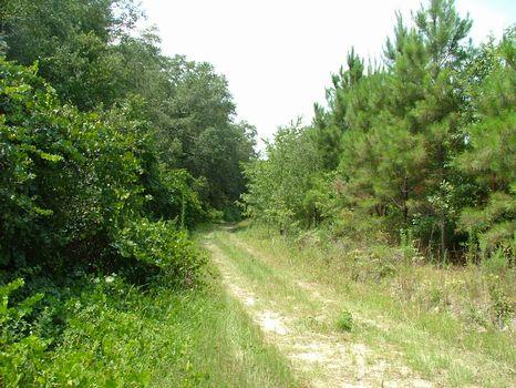 16.62 Acre Lot : Vidalia : Toombs County : Georgia