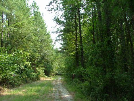 15 Acre Lot : Vidalia : Toombs County : Georgia