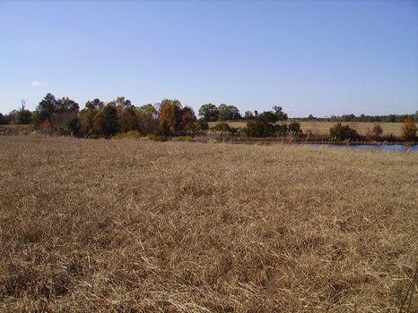 4.65 Acres | Bark Creek Plantation : Waynesboro : Burke County : Georgia