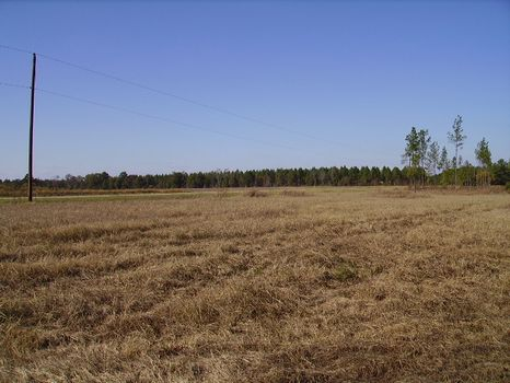 3.31 Acres | Bark Creek Plantation : Waynesboro : Burke County : Georgia