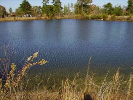 4.16 Acres   Bark Creek Plantation : Waynesboro : Burke County : Georgia